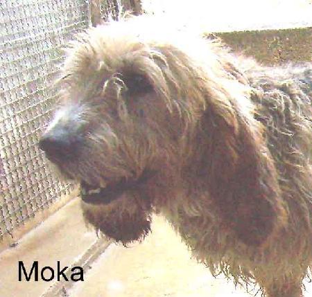 moka2.jpg