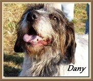 Dany, 1 amour de mâle X Griffon de 6 ans, en SPA dans Souvenirs de nos amis dany