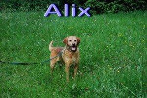 Alix, adorable X Griffon en SPA dans Souvenirs de nos amis alix-300x201