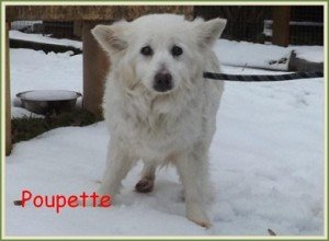 Vite un foyer pour Poupette, un amour de louloutte de 14 ans dans Ils ont trouvé un foyer poupette-300x220